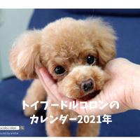 【予約販売】 トイプードル コロン 2021年 卓上カレンダー TC21107