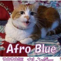 【送料無料】2020年『Afro Blue』卓上カレンダー