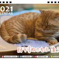 【予約販売】 日刊 ねこもふ生活 2021年 卓上カレンダー TC21050