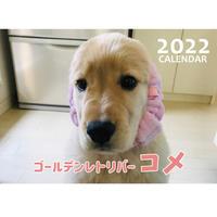 【予約販売】 ゴールデンレトリバー コメ 2022年 壁掛け カレンダー KK22118