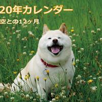【送料無料】2020年『白柴 空』壁掛けカレンダー