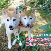 【送料無料】2020年『柴犬ひかりといちごと猫ミルキーときらら★』壁掛けカレンダー