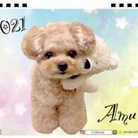 【予約販売】 トイプードル amu 2021年 卓上カレンダー TC21096