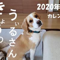 【送料無料】2020年『うぃるさん』壁掛けカレンダー