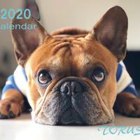 【送料無料】2020年『torus』壁掛けカレンダー
