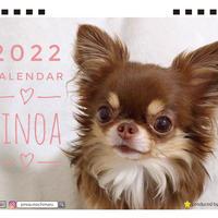 【予約販売】 チワワのPINOA 2022年 卓上 カレンダー TC22064