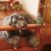 【送料無料】2020年『jioFamily』壁掛けカレンダー