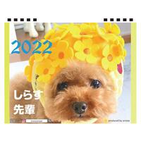 【予約販売】 トイプードル しらす先輩 2022年 卓上 カレンダー TC22079