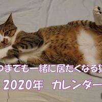 【送料無料】2020年『面白くてかわいい子猫チャンネル』壁掛けカレンダー