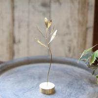 Table Plants [ オリーブ ]