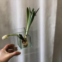 球根花と花瓶のSET  S  vol,2