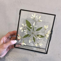 flower Photo flame=置型 snow white=