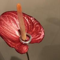 PORTE BONHEUR  - classic  ring -