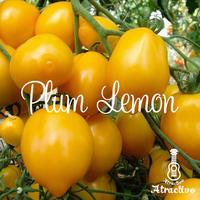 フルーツみたいに糖度が高いレモンそっくりな/プラムレモントマトの種