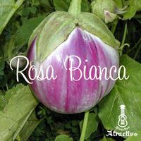 イタリアの伝統的な茄子ロッサビアンコの種