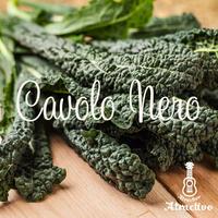 イタリア野菜で知られるカーボロネロ(黒キャベツ)の種