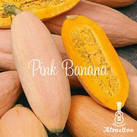 アメリカで100年以上前から栽培されている/ピンクバナナかぼちゃの種