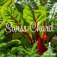 色鮮やかなイタリア野菜スイスチャードの種