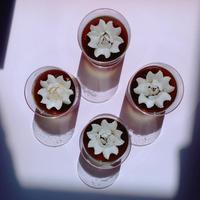 全国発送の注文はこちらから【同梱なので送料お得】花のカタチのミルクゼリー 黒4個セット×2箱 合計8個でワンセット