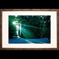 神宮の森に注ぐ陽光(Lサイズ)