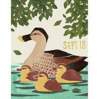 【日本画】9/18 Common duckカルガモ『366DAYS』