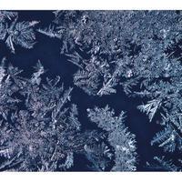 THA BLUE HERB / THA BLUE HERB [4CD]【生産限定盤】 [CD]