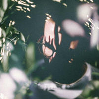 HENRY GREEN / SHIFT [CD]