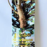 バオバブの木 2-3年  (Adansonia Digitata)