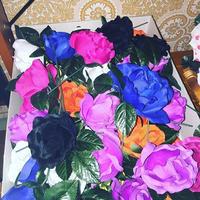 Floresitas (カラー豊富)