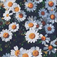 お花がらのプレートセット