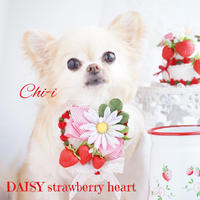 DAISY strawberry heart RED