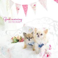 Romantic Pink Garland