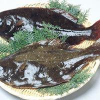 宇和島産 ヒラメ まるごと1尾 約1kg