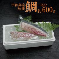 宇和島産 伊達真鯛 短冊 1尾分 約600g