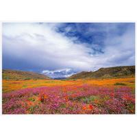 【送料無料】澤野新一朗 ナマクアランドの花園 ポストカード06004