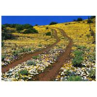 【送料無料】澤野新一朗 ナマクアランドの花園 ポストカード04000