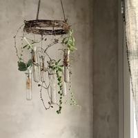 Cactus Chandelier(カクタスシャンデリア)
