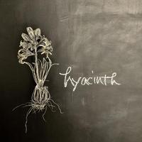 hyacinthus(ヒアシンス)瓶付き