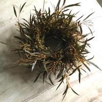 Eucalyptus Albida Wreath (ユーカリ アルビダのリース)