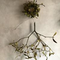 Dried mistletoe mini wreath&Hanging branch (宿木のミニリースとハンギングブランチ)