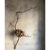 "Birds nest wreath with a birch branch ""White eye""(白樺枝付きバーズネストリース""メジロ"")"