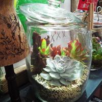 【My little garden】ボトル・ボタニカル・ガーデン多肉植物エアープランツ作成キット