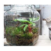 2032050910389食虫植物作成キット(植物なし)