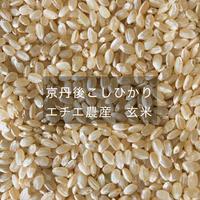 京丹後こしひかり エチエ農産 玄米 5kg(有機JAS認証)