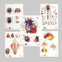 マキトー・コンフォート / 人体解剖クリアファイル 5-Type