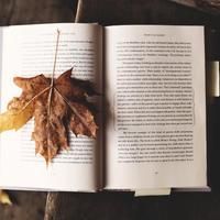 「11月の本」 おまかせ2冊パック