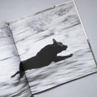 DOGS CHASING MY CAR / John Divola (ジョン・ディボラ)