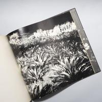 植物に / 山村雅昭 (Gasho Yamamura)