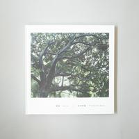 [新刊] 密雨 / 広川智基  (Tomoki Hirokawa)