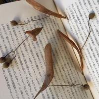 菩提樹の葉(5枚入)
